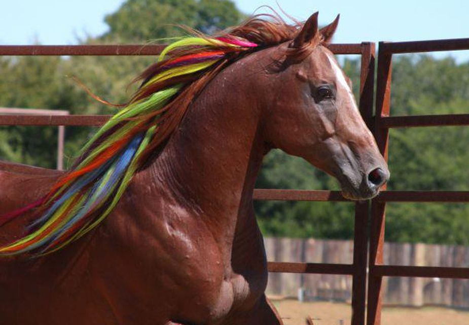 Amazing Colourful Mane Extensions Multi Color Horses Xi
