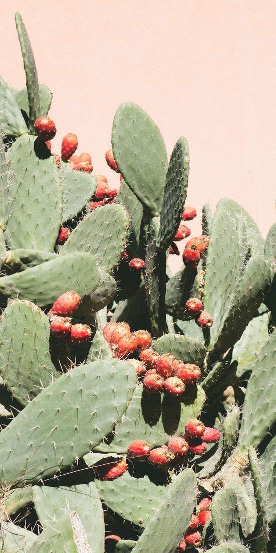 L'extrait de cactus est la nouvelle tendance des soins de la peau que vous devriez essayer dès maintenant   – Digital stuff