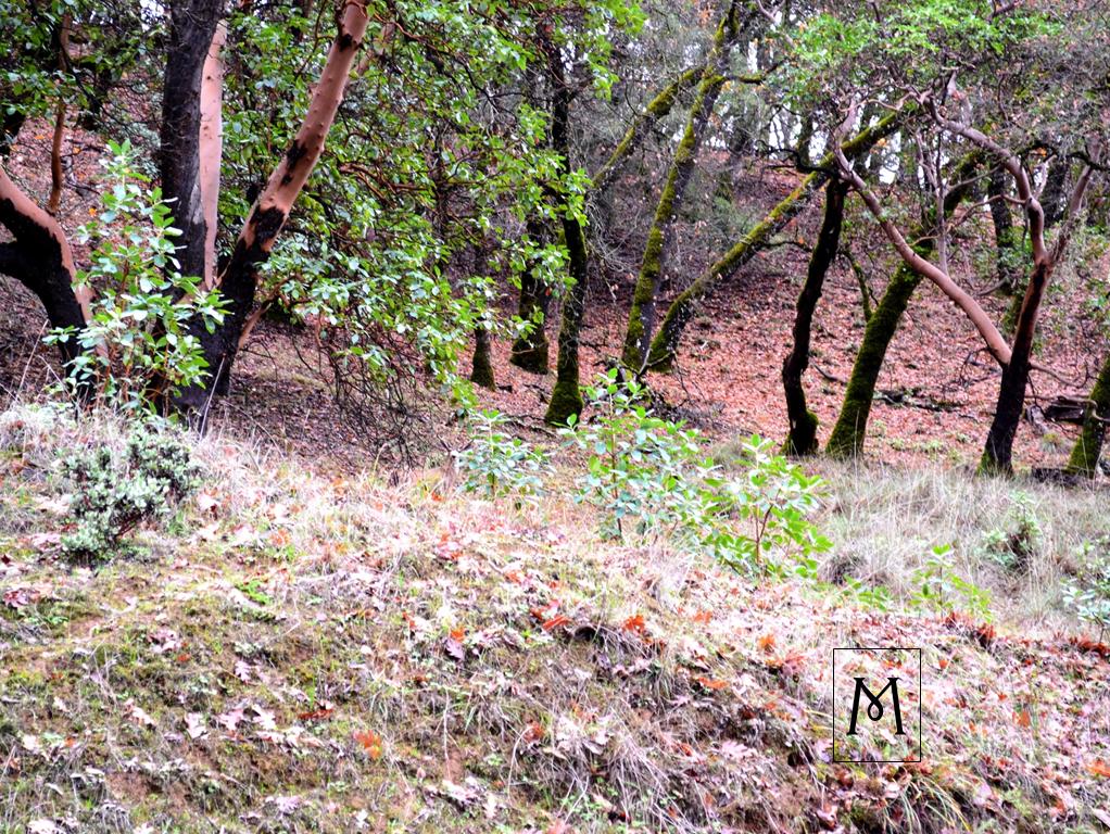 Find the Hidden Deer in Plain Sight!