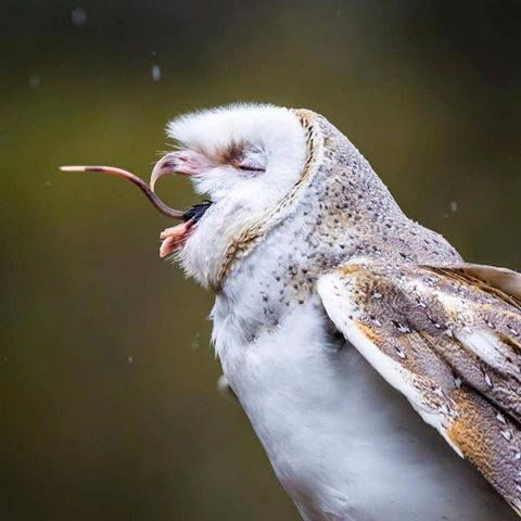 Pin By Paula Hanlon On Nature S Winged Flowers And Fauna Owl