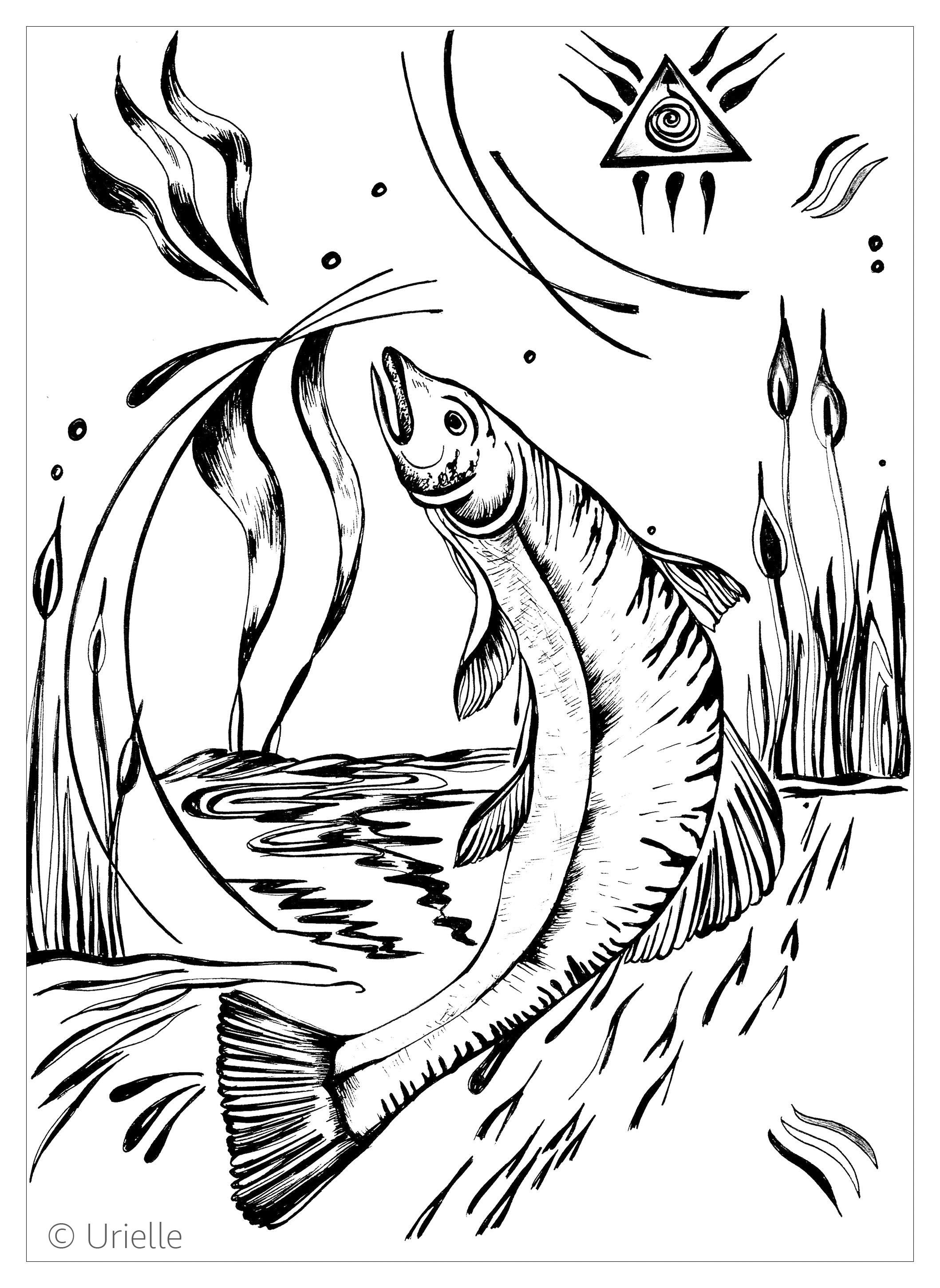 Salmon - Fishes Coloring Pages for Adults - Just Color ...