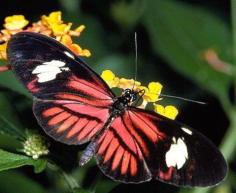 Tropical Rainforests Amazon Rainforest Animals Tropical