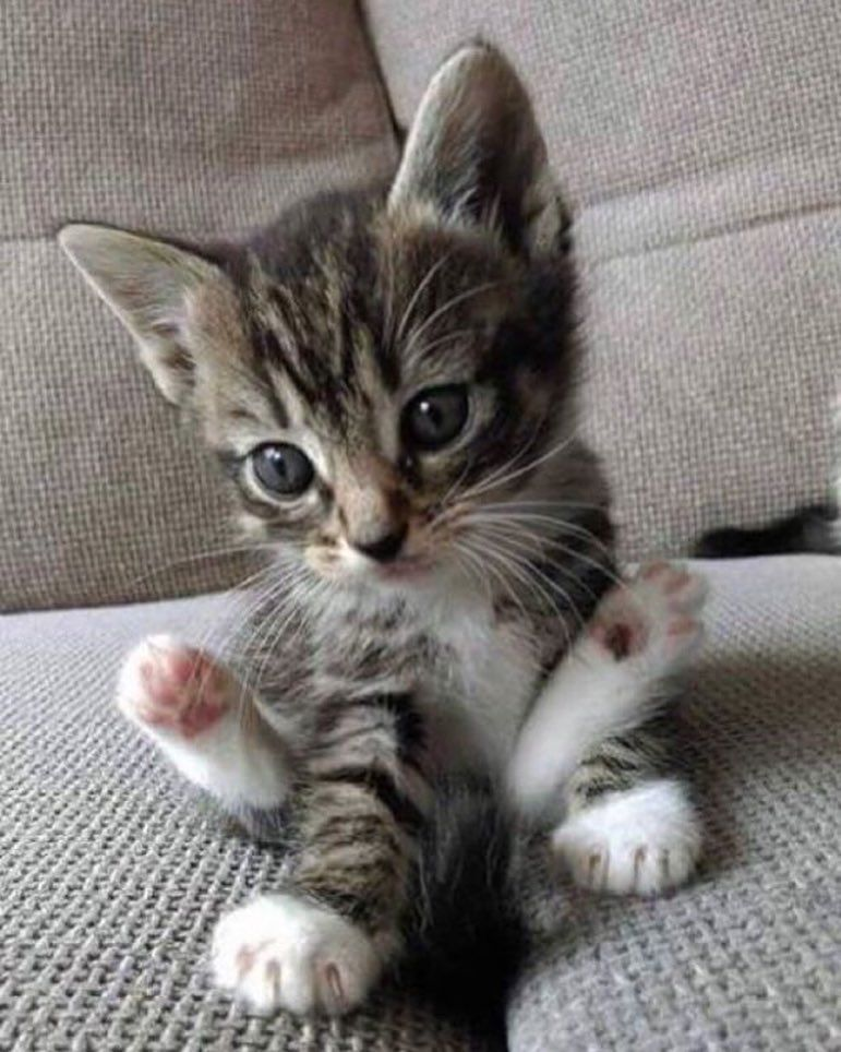 No Important Announcement Here Today Just A Picture Of A Kitten That S Going To Get Me Through The Res With Images Cute Baby Animals Kittens Cutest Cute Animals