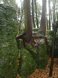 Der Druidenhain – das fränkische Stonehenge | Bewusstseinswandel-Blog von Alex Miller |
