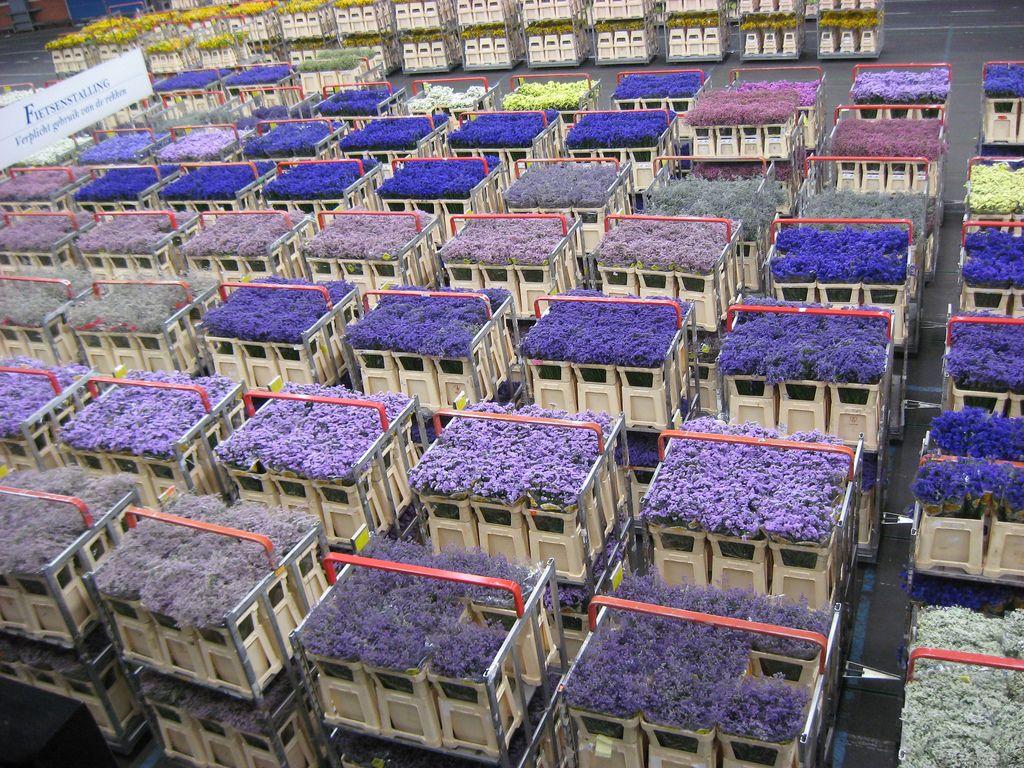 Holland netherlands The Aalsmeer Flower Auction House
