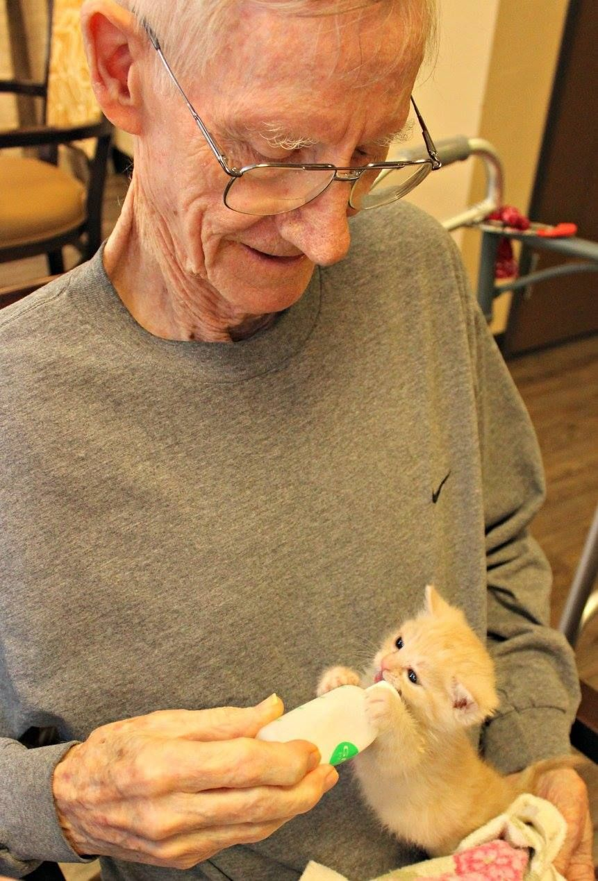 nursing home gives residents foster kittens to care for happiness rh pinterest com