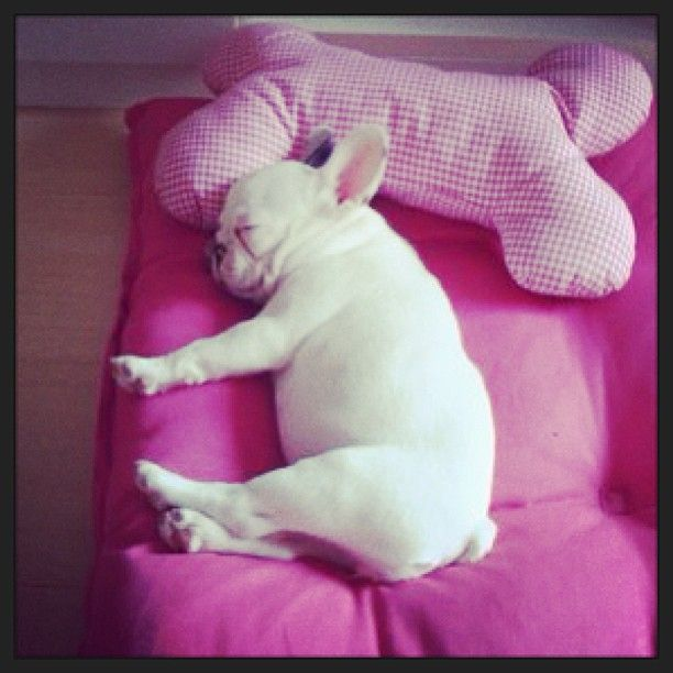Sophie Loves Napping And The Color Pink Tiere