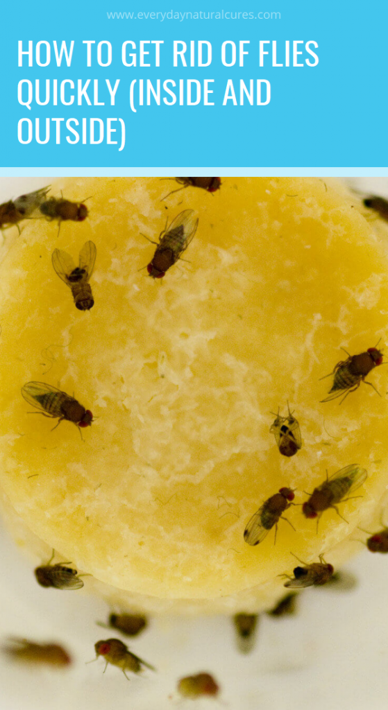 Flies Can Be Quite Disturbing As They Are Constantly Around Us And We Wave The Hands To Make Them G Get Rid Of Flies Natural Healing Remedies Natural Remedies
