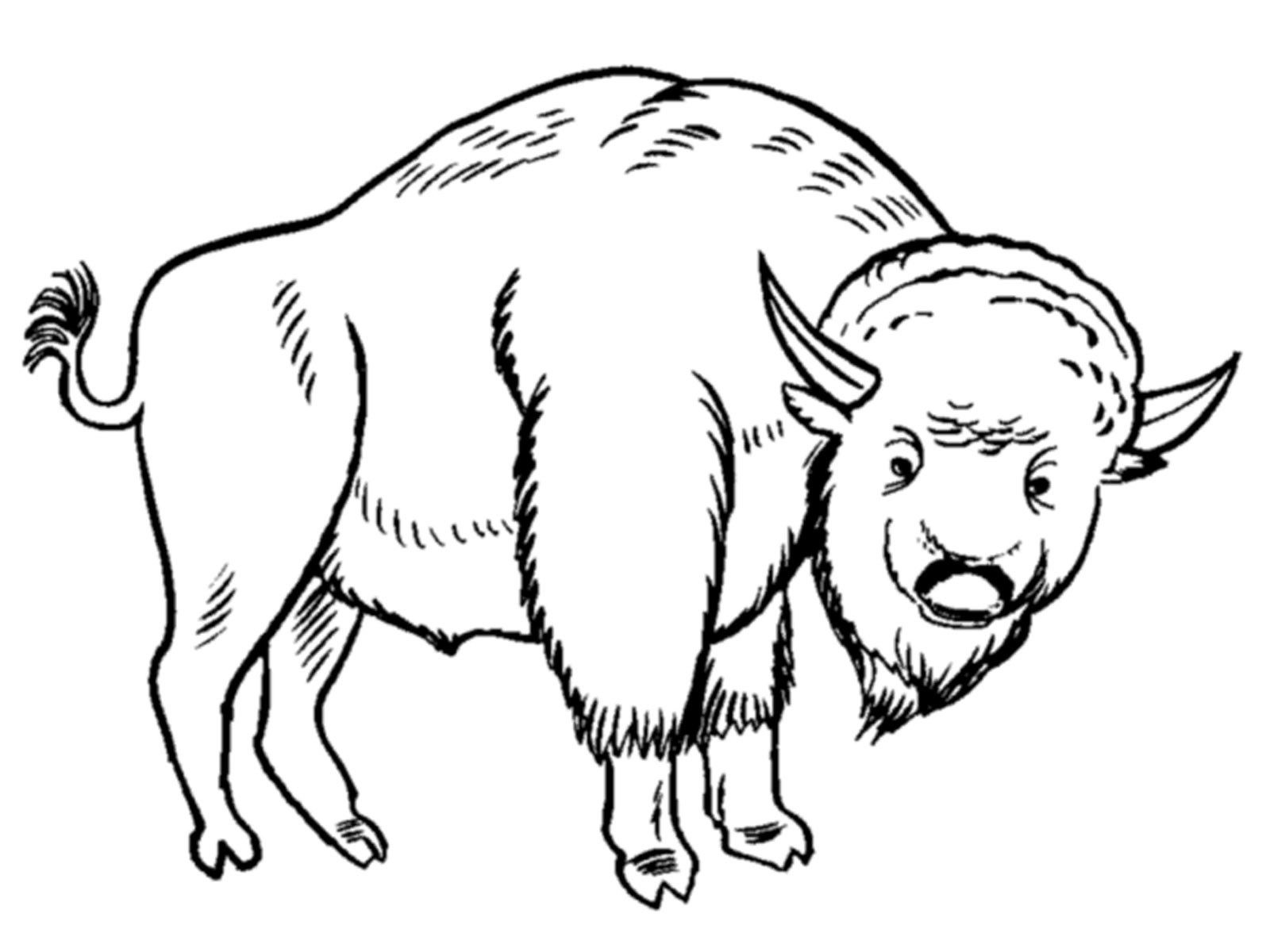 Grassland Animals Coloring Pages From The Thousands Of Images On The Net With Regards To Grassland Animals Coloring Pages We Choices The Top Libraries Along