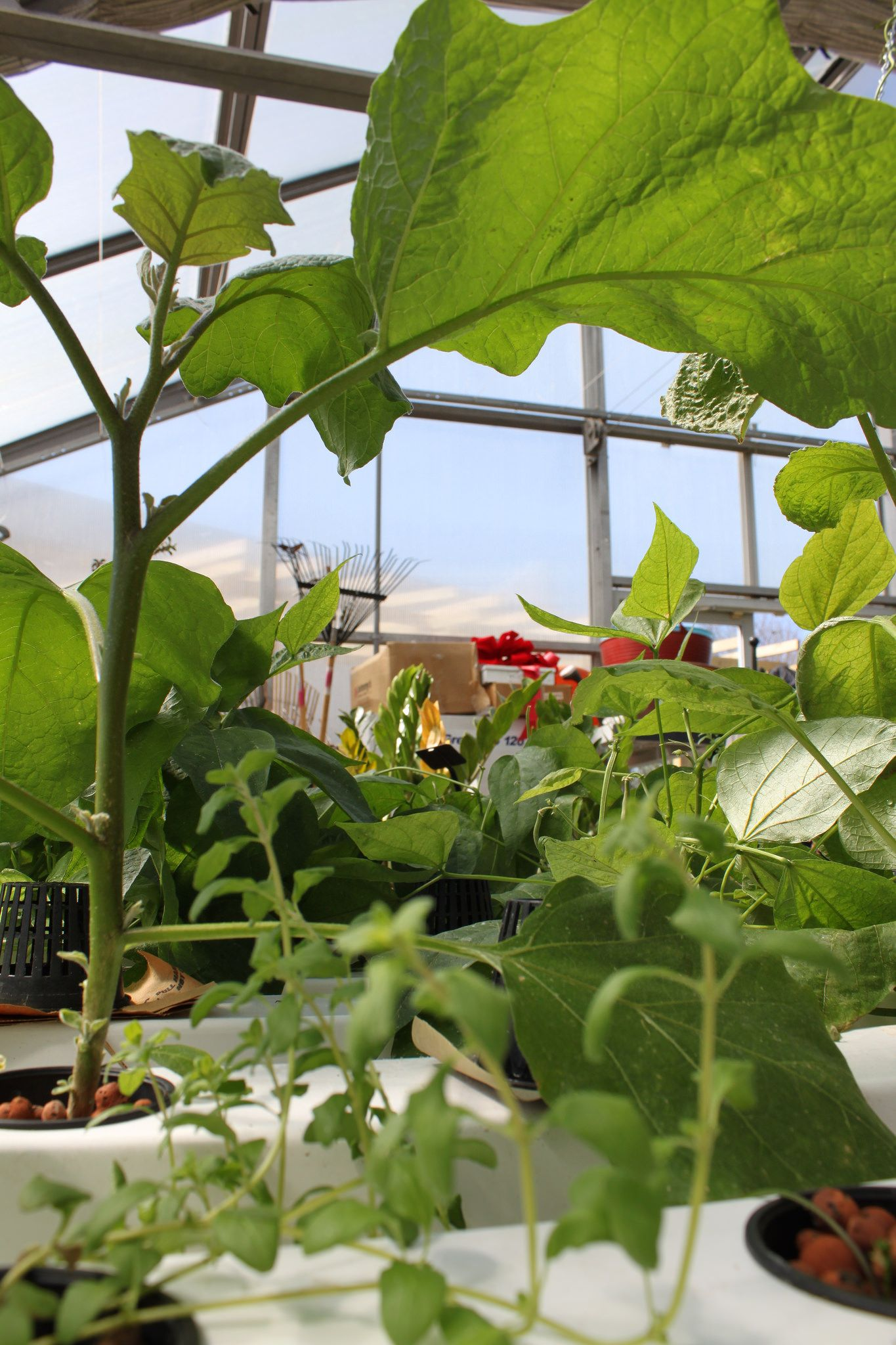 How to grow hydroponics