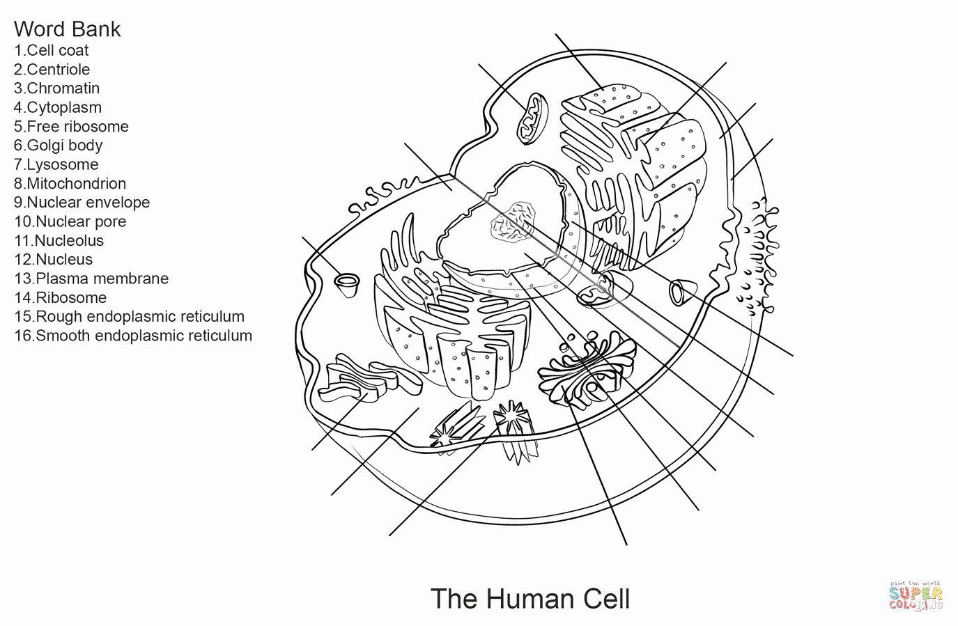 Animal Anatomy Coloring Book Beautiful Human Cell
