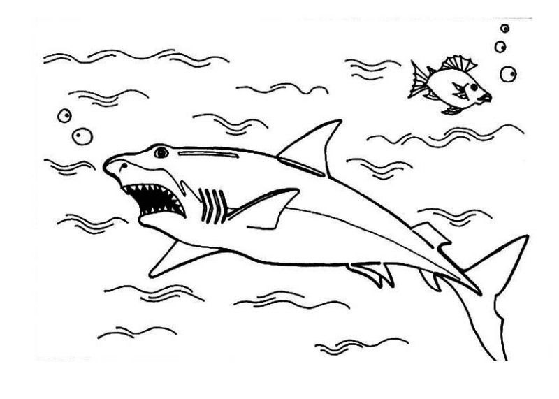 sharks great white sharkthe oceansharksdinosaurscoloring pages promotionhunting - Great White Sharks Coloring Pages