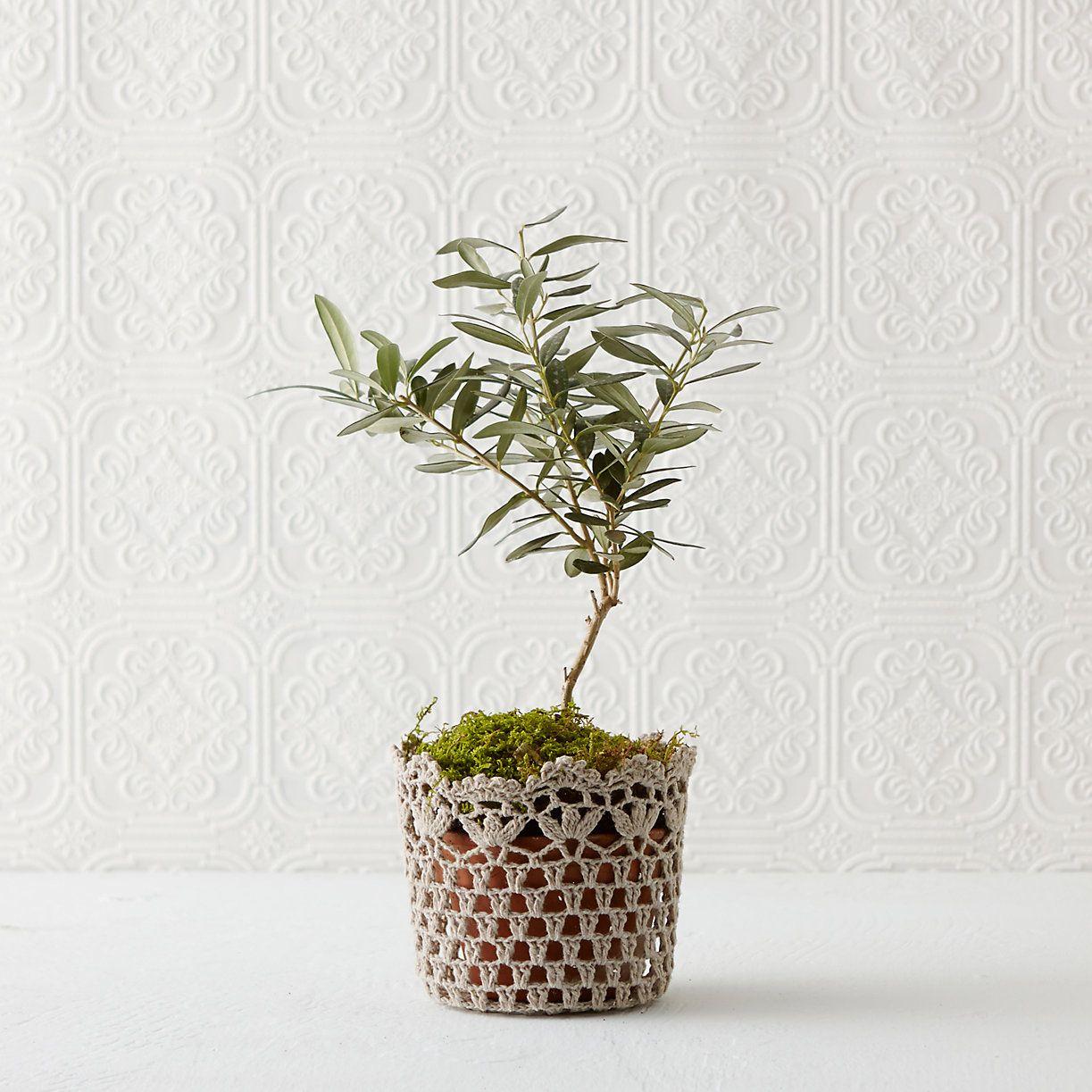 Crochet cotton pot cover flower pots best gifts for