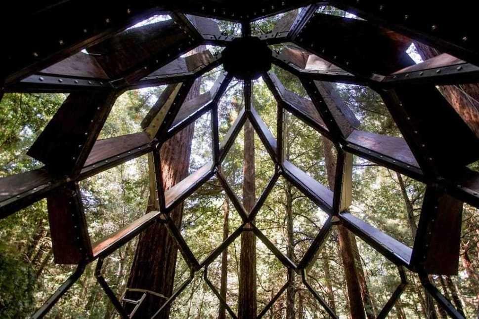 une incroyable cabane vitr e dans les arbres en forme de pomme de pin louer ou acheter