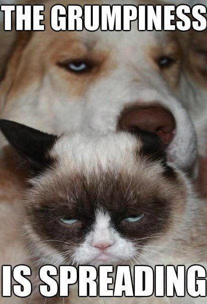 Grumpy cat and grumpy dog - www.funny-pictures-blog.com