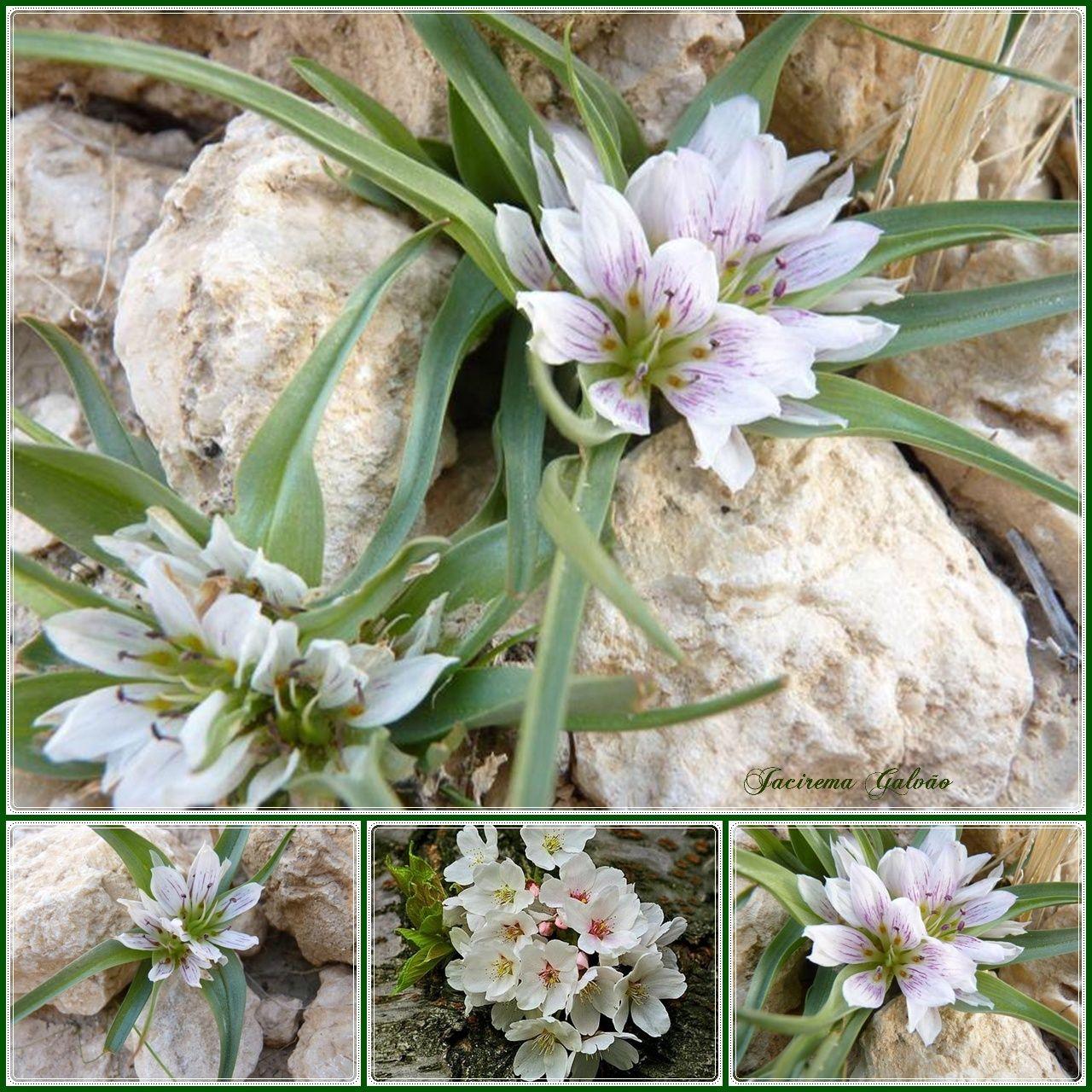 Flores nas pedras