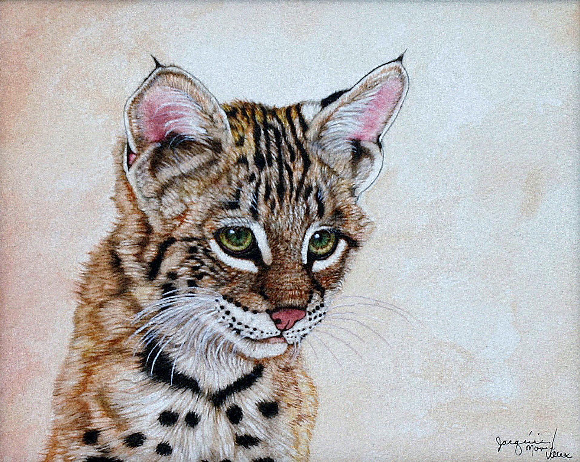 """I'm a cutie""""--Bobcat Cub- Animal Art"""