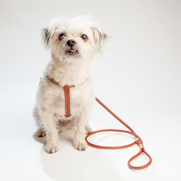 La Cinopelca Italian Leather Harness In Brown Leather Harness