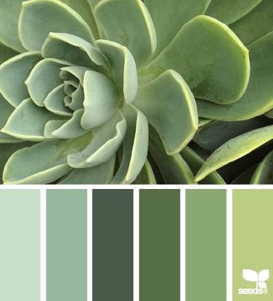 succulent tones - design seeds. Just because I love succulents.