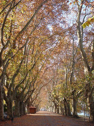 Tg 00150 Avenida Dos Platanos Ponte De Lima The Minho Portugal Image By Craig Hill Travelgroupie Com Favorite Places Places To Visit Portugal