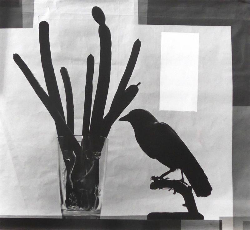 Cuervo negro, semillas negras, México, 2015