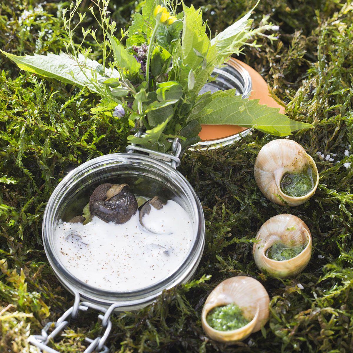 escargots de bourgogne en coquille en cocotte d orge perl nos recettes a g entr es. Black Bedroom Furniture Sets. Home Design Ideas
