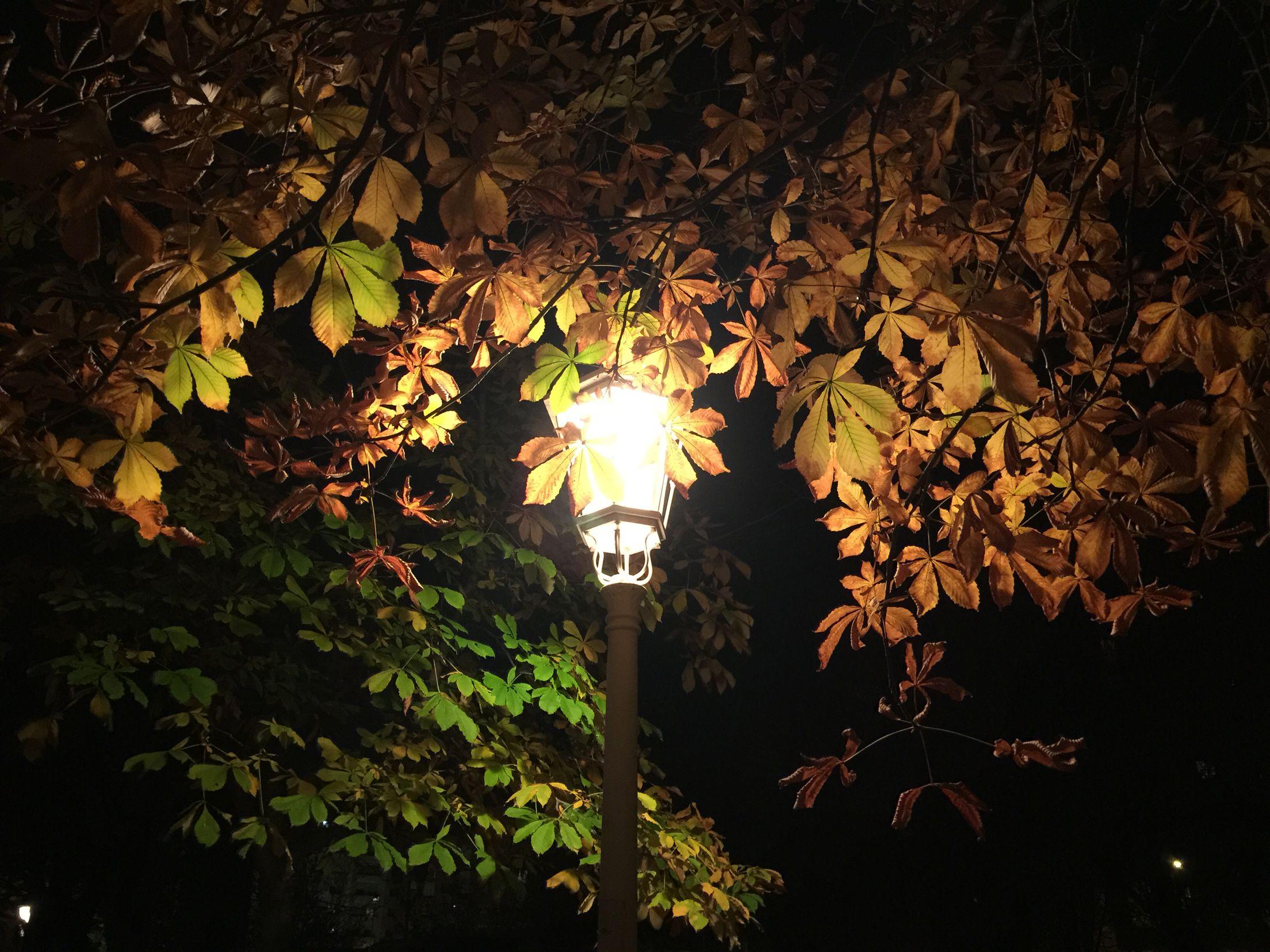 Cae la noche y el otoño...