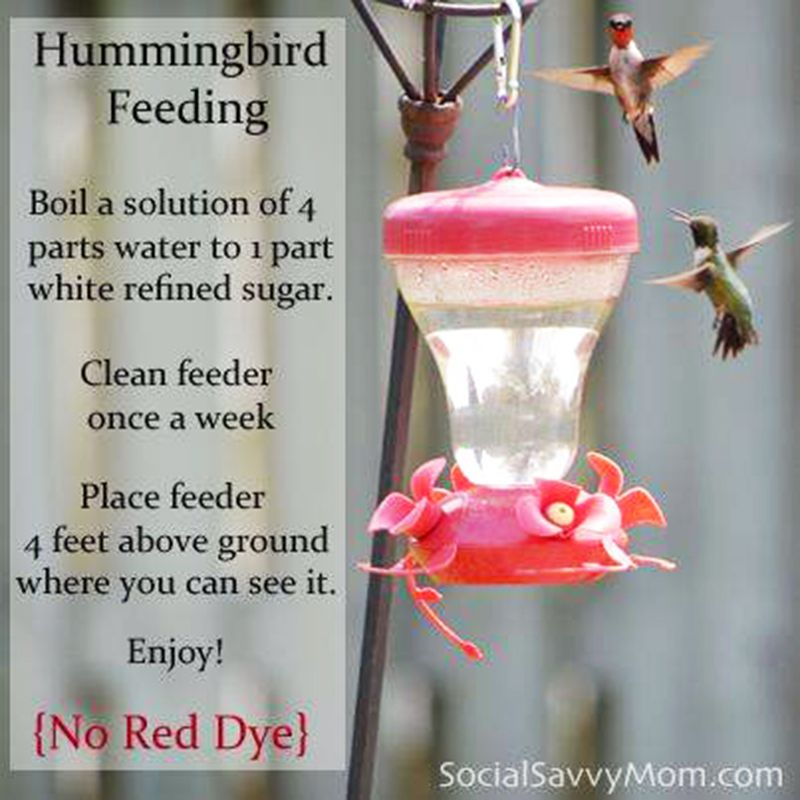 A Healthy Alternative To Red Dye For Hummingbird Food The Red Dye