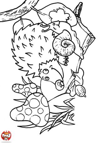 Hugo L Escargot Coloriage Herisson.Coloriage Herisson Et Escargot Lutins Et Foret Magique