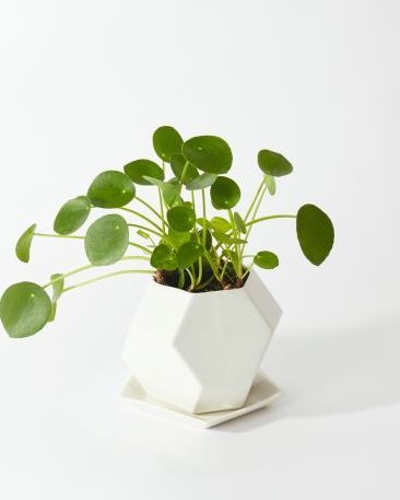 23 Small Indoor Houseplants to Add to Your Collection