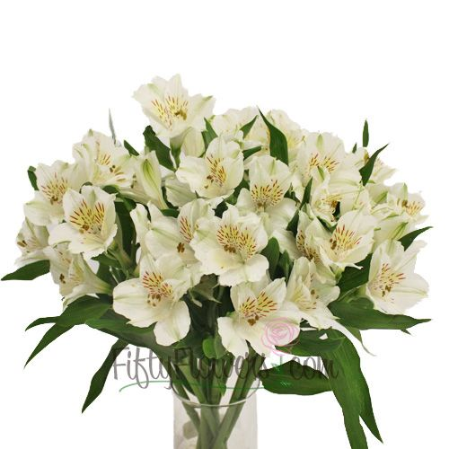Cream alstroemeria google search italian theme pinterest cream alstroemeria google search mightylinksfo Gallery