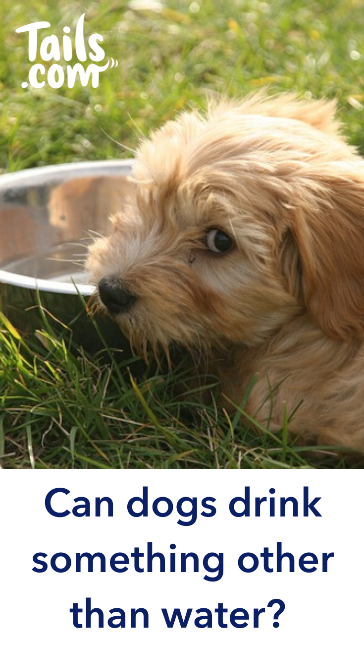 Water is the best drink you can give your dog. All dogs