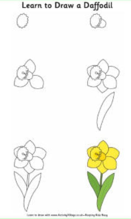 How To Draw A Daffodil Easy Flower Drawings Learn To Draw Flowers Flower Drawing