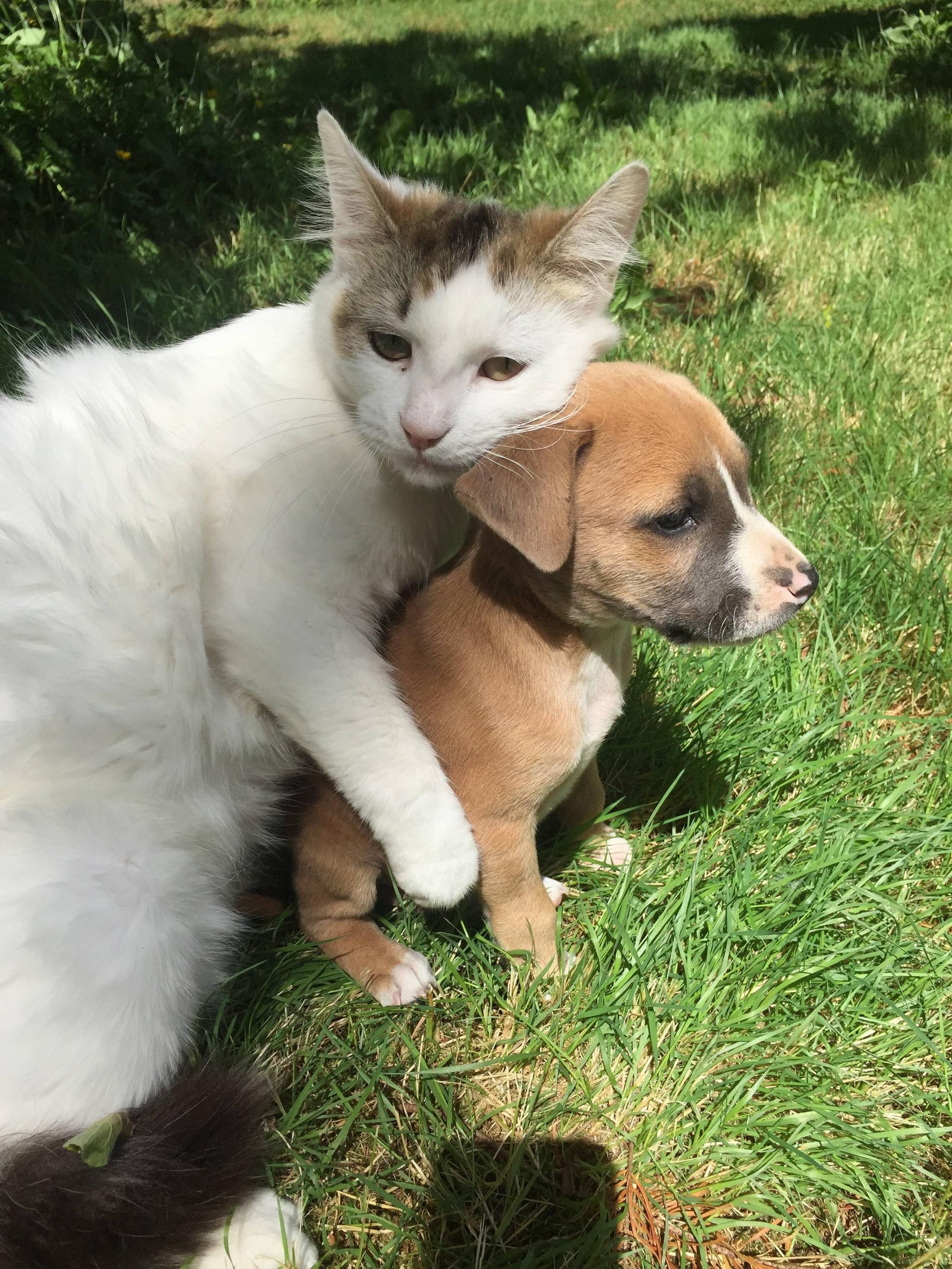 8 Cutest Dogs And Cats Friendship Cute Puppies And Kittens Cute