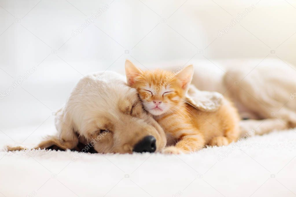 Cat And Dog Sleeping Puppy And Kitten Sleep Stock Photo Sponsored Sleeping Puppy Cat Dog Cute Puppies And Kittens Sleeping Puppies Sleeping Dogs