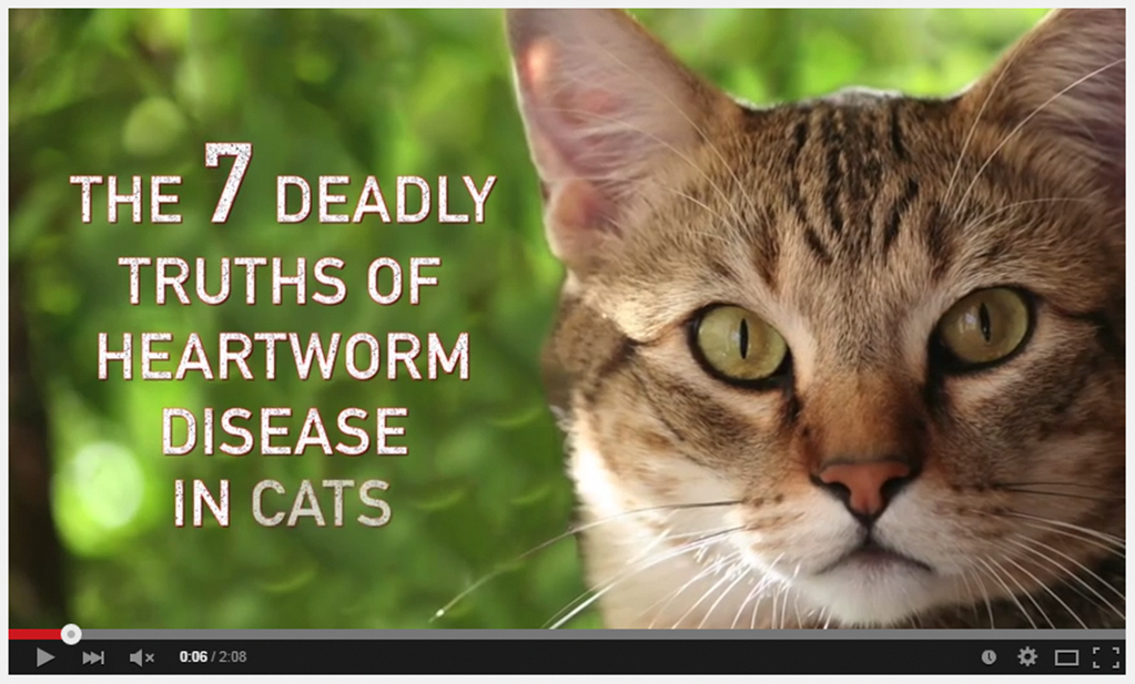 Cats Afraid Of Cucumbers Heartworm disease, Heartworm, Cats