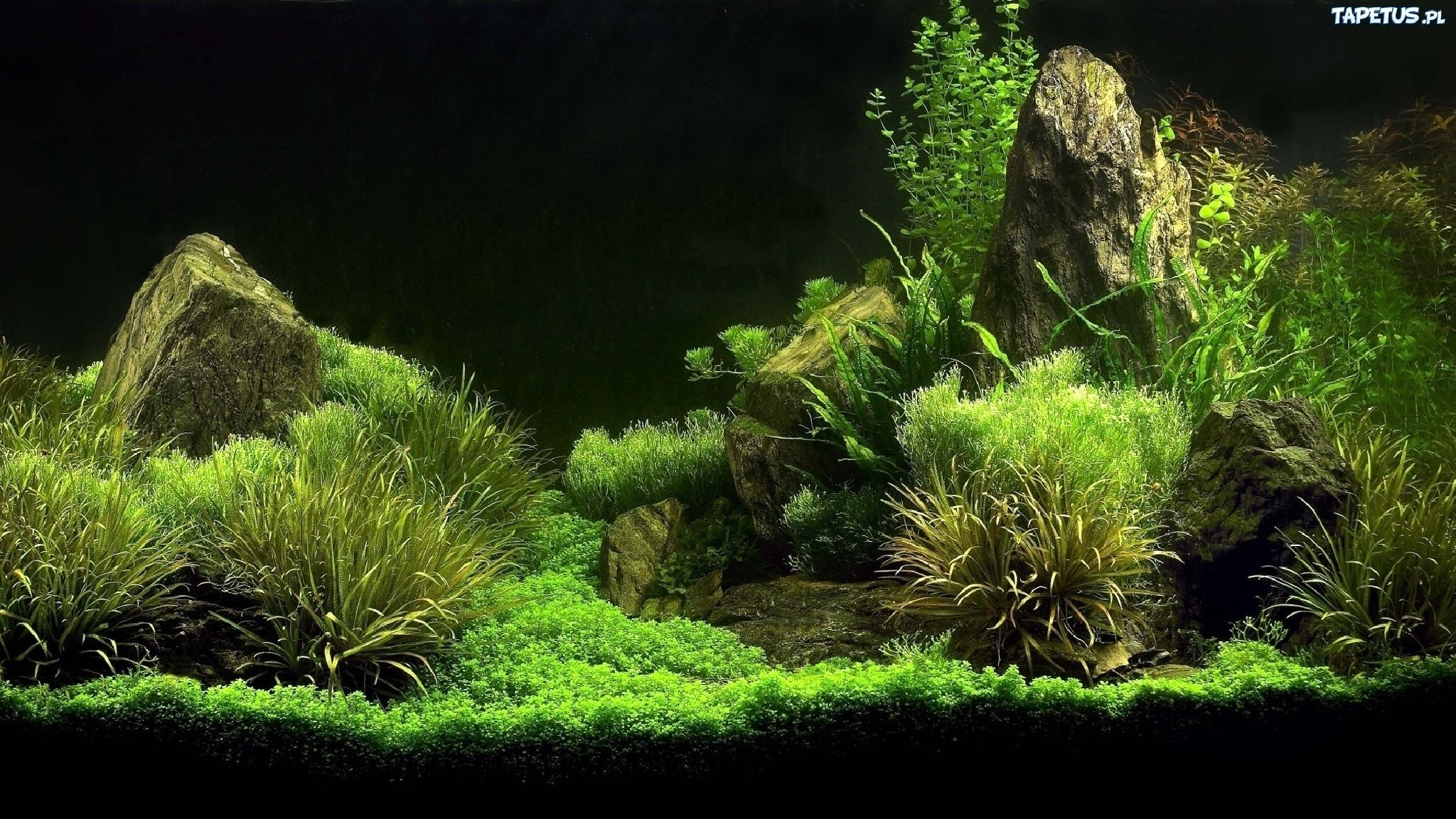 tapetus pl php 2048 1152 aquariums and aquascapes aquarium rh pinterest com