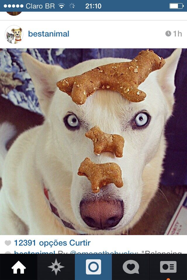Dogbiscuits