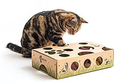 Amazon Com Cat Amazing Best Interactive Cat Toy Ever Treat