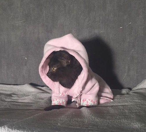 الدولة الرياض رقم الموبايل 0503387271 معلومات عن الإعلان الاسم سنوي عمرها شهر و8 ايام نوعها بيرشن لونها اسود م Fake Girls Boston Terrier Terrier