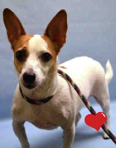 Poor Mac No Mercy Ever Killed 01 17 19 To Die 01 17 19 Pet Organization Nyc Dogs Animal Crackers