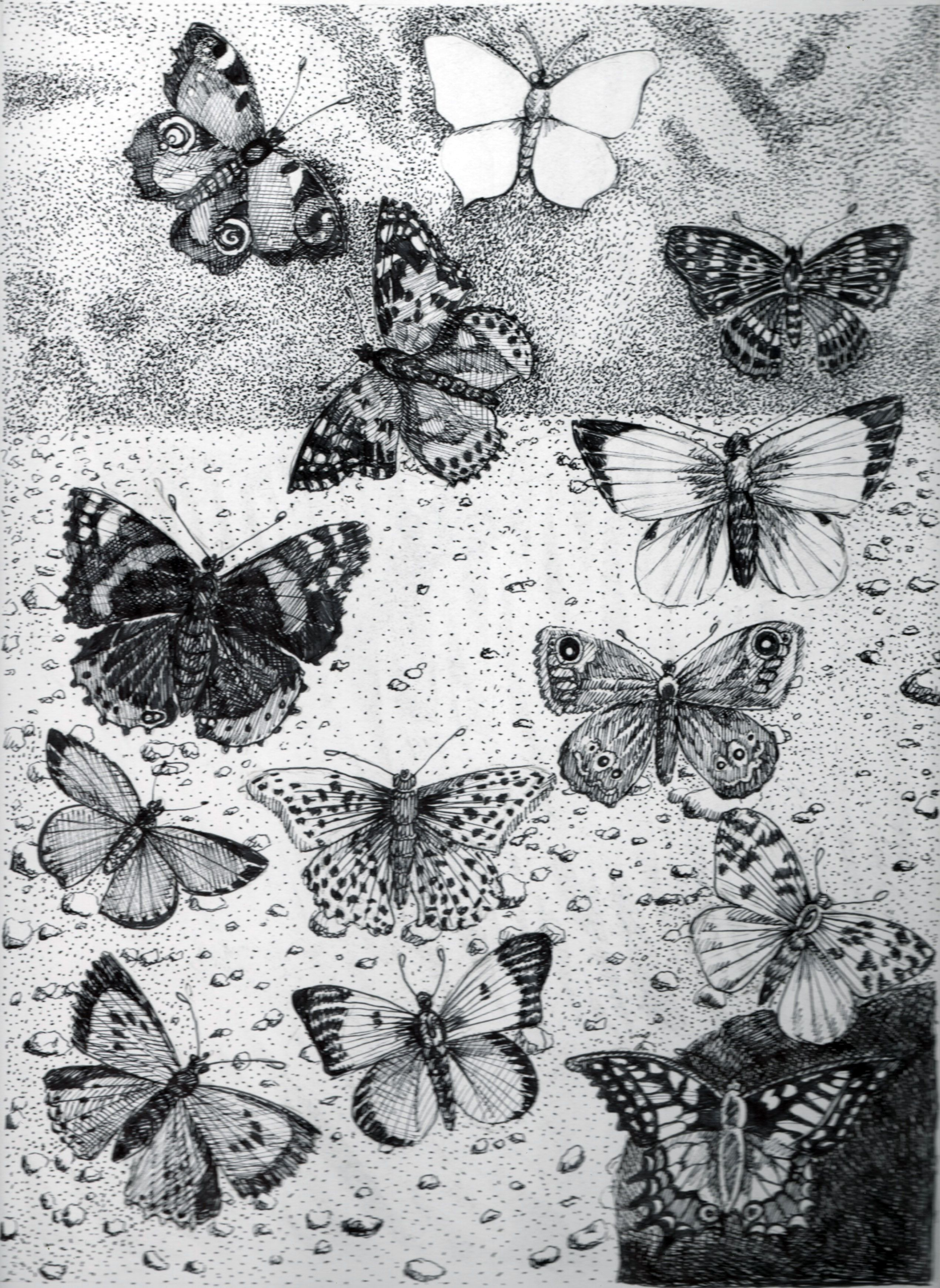 """Ron Laboray-""""With an image of the last battle of the French and Indian War on the horizon, the first image of Mars form Mars is obscured by examples of German butterflies."""" Image 11.5""""x8.5"""" Acid free ink on 11x14"""" Bristol paper. 2016"""