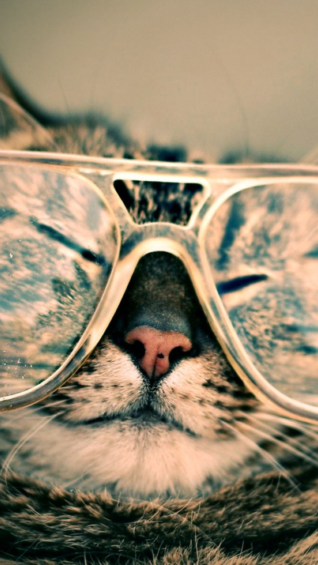 tap and get the free app fun funny cat in glasses beige cool