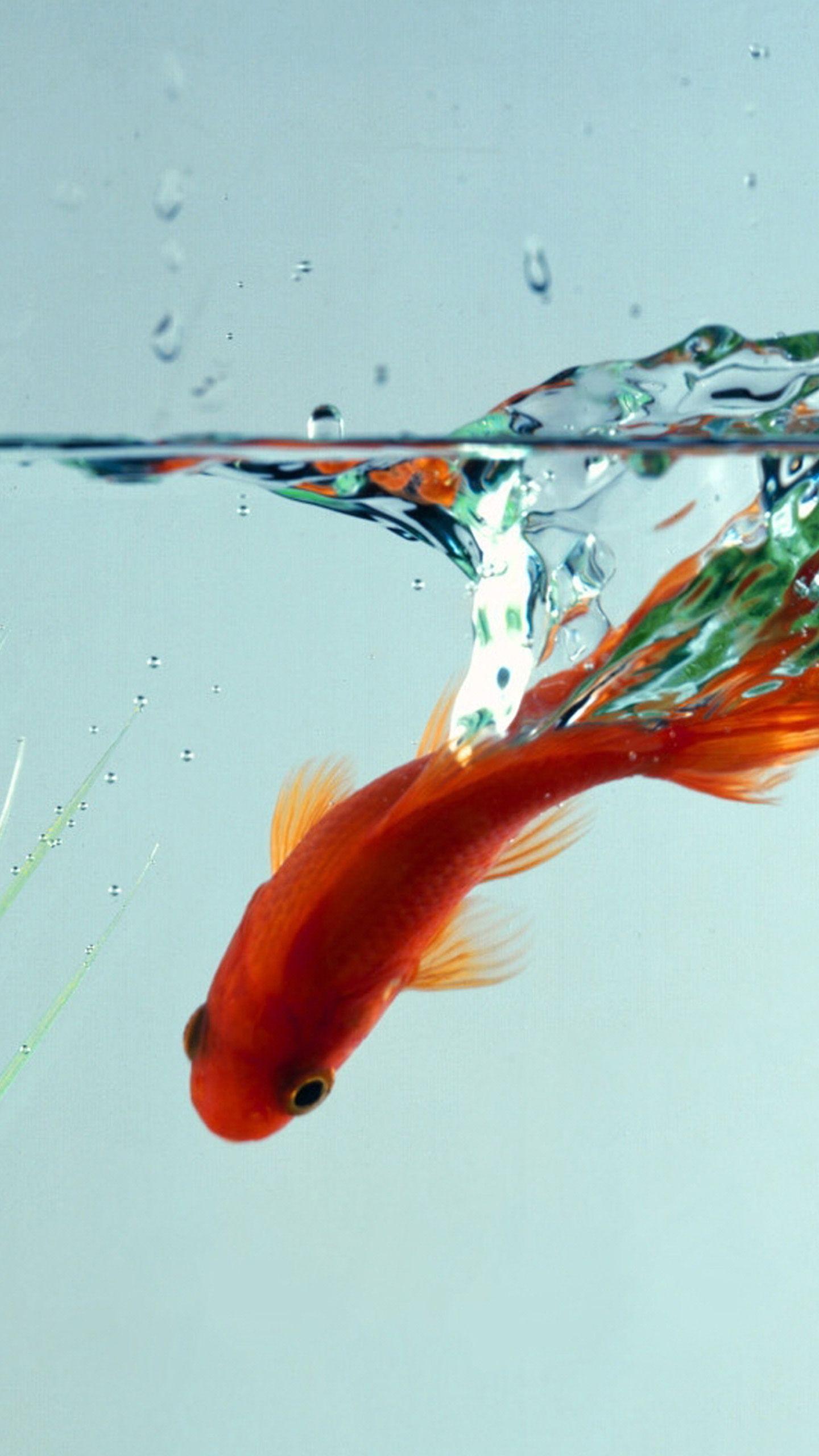 Pin by ali mohamed on metal gear fish wallpaper fish - Carp wallpaper iphone ...