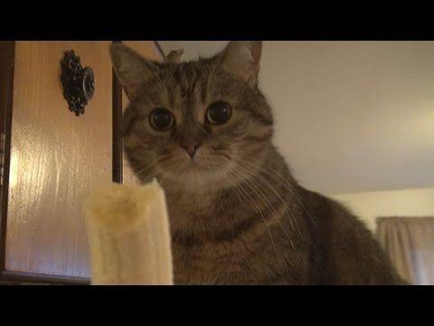 Cat+vs+Banana%21+-+http%3A%2F%2Fbest-videos.in%2F2013%2F01%2F20%2Fcat-vs-banana%2F