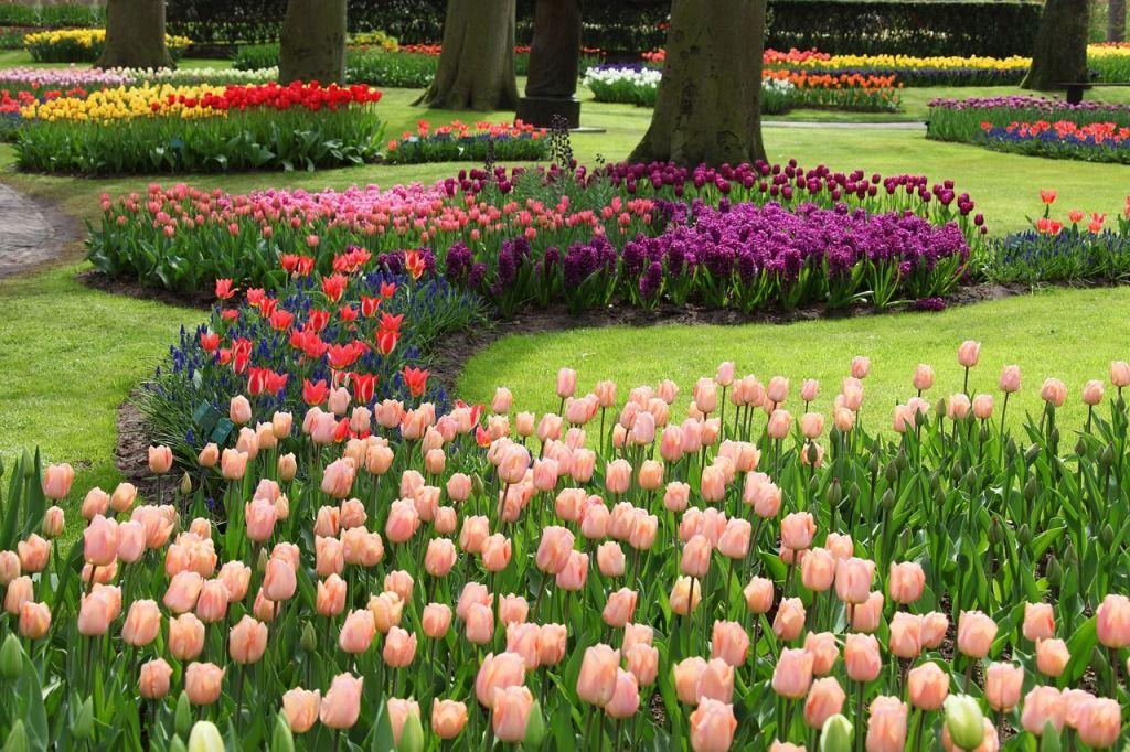 как красиво посадить тюльпаны на участке фото них