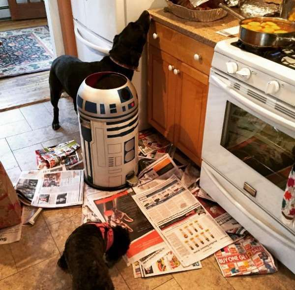 A kitchen raid is all fun and games until R2-D2 gets involved. - Ally Hirschlag