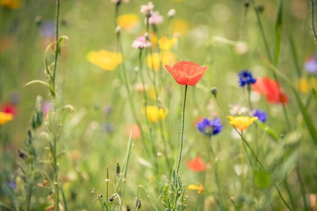 Manchmal Braucht Man Einfach Ein Bisschen Blumenwiese Fur Den Fall Dass Es Euch Genauso Geht Habt Ihr Hier Eine Birgajelinekfotografie Plants