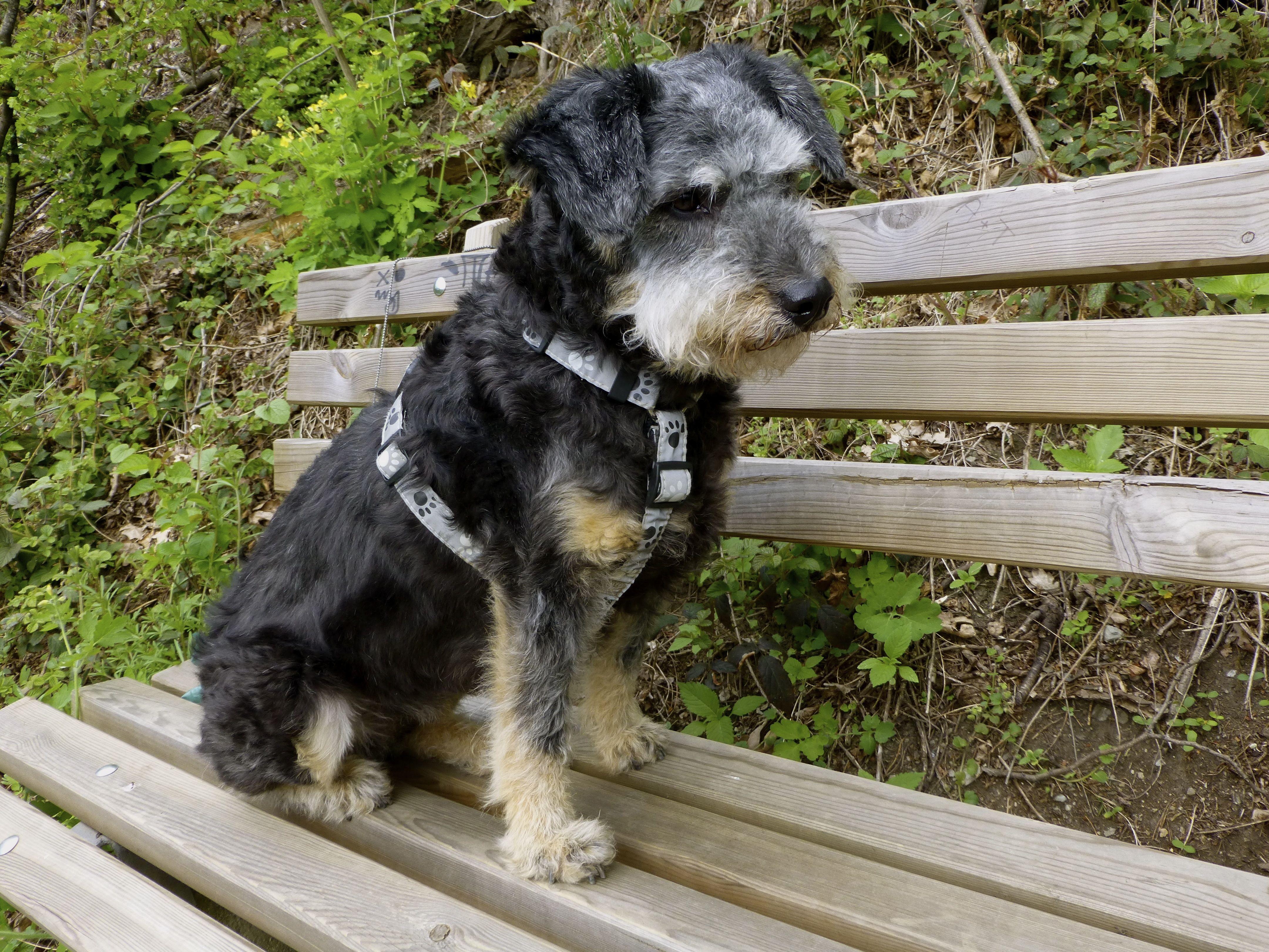 Jeannie Hund Pawshake Hunde