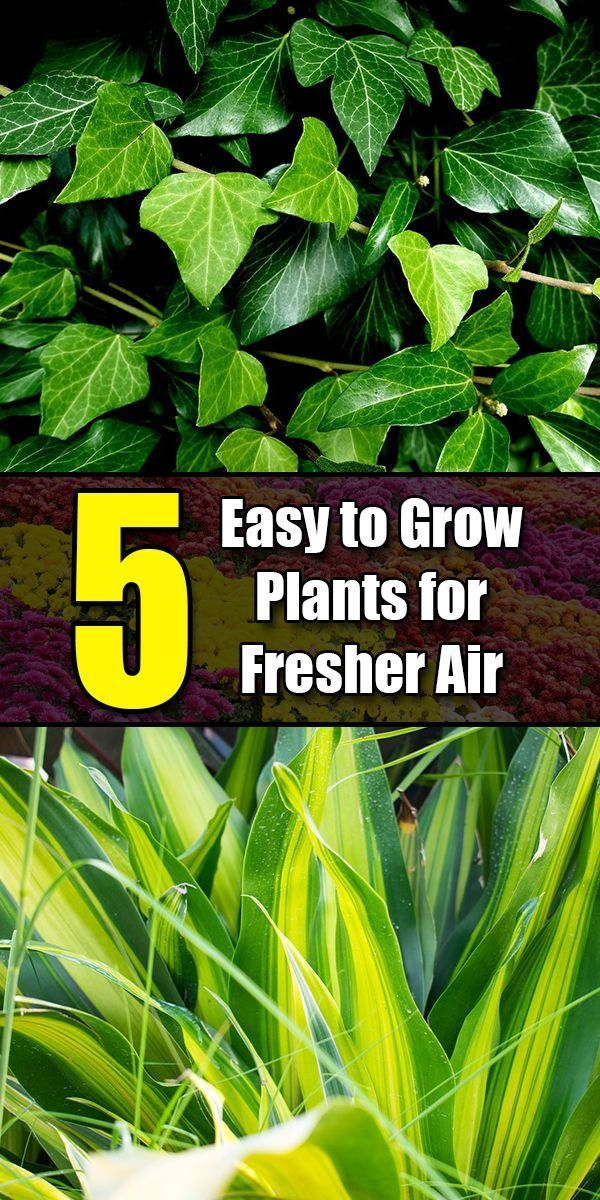 5 Easy to Grow Plants for Fresher Air #howtogrowplants